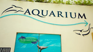Interactive aquarium cancun